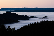 Morning Fog, Santa Cruz Mountains
